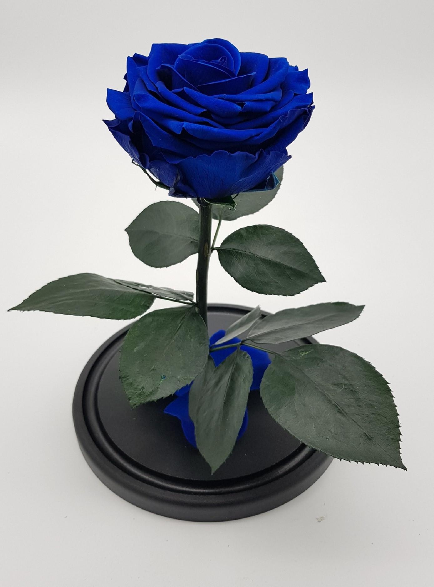 Роза в колбе премиум 7-8 Синяя 27*15*8 см