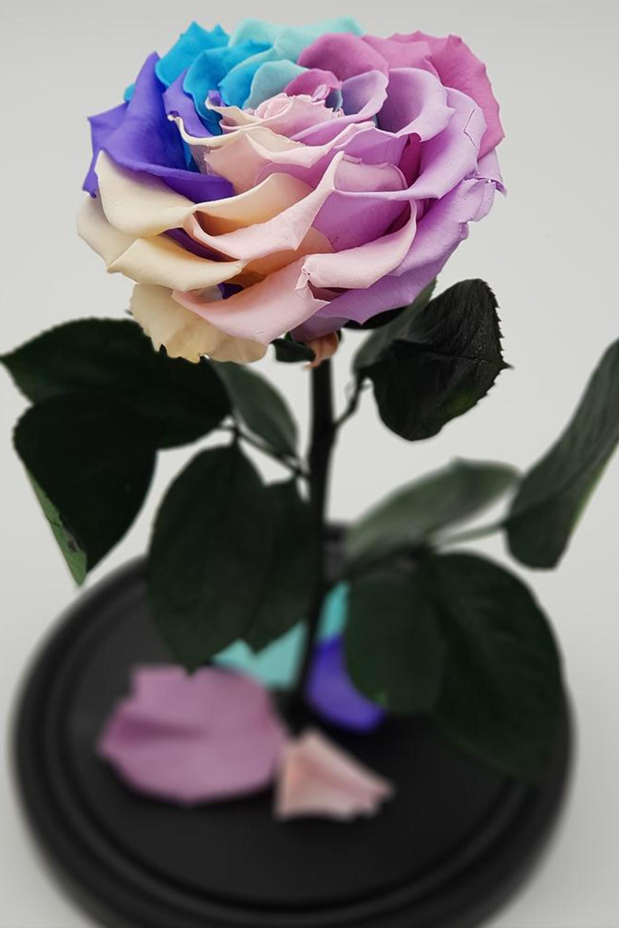 Роза в колбе премиум хит Радужная 27*15*11см