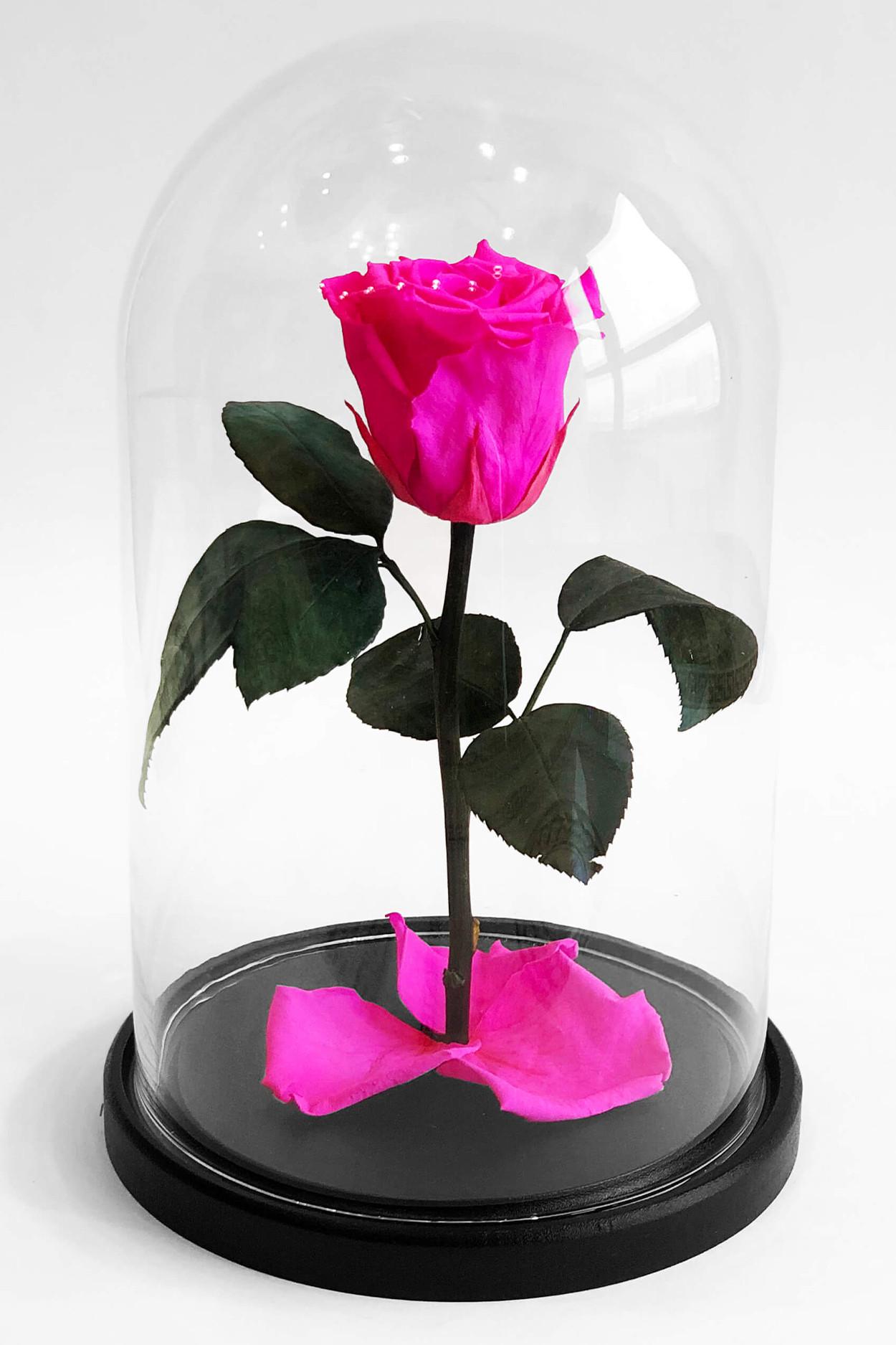 Роза в колбе мини Фуксия 22*12,5*6см
