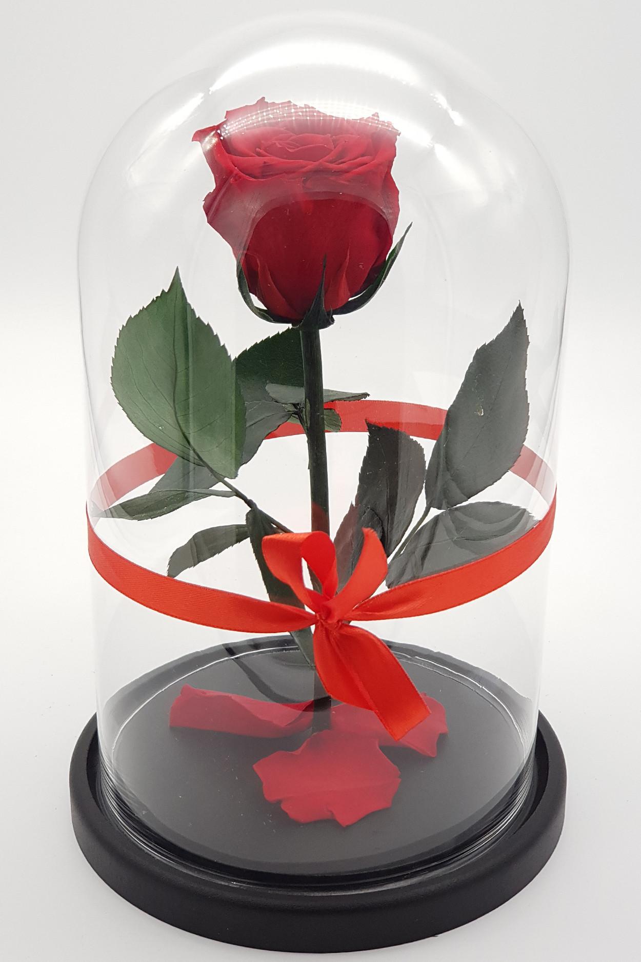 Роза в колбе премиум красная 27*15*6см