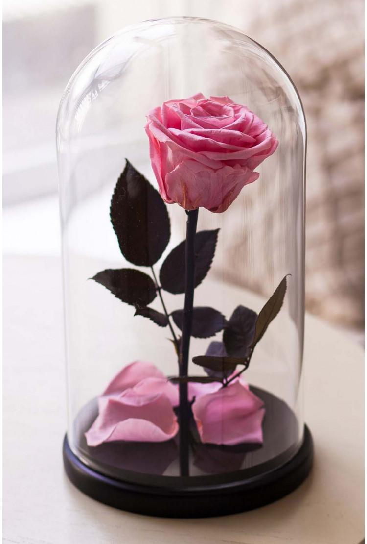 Роза в колбе премиум нежно розовая 27*15*6см