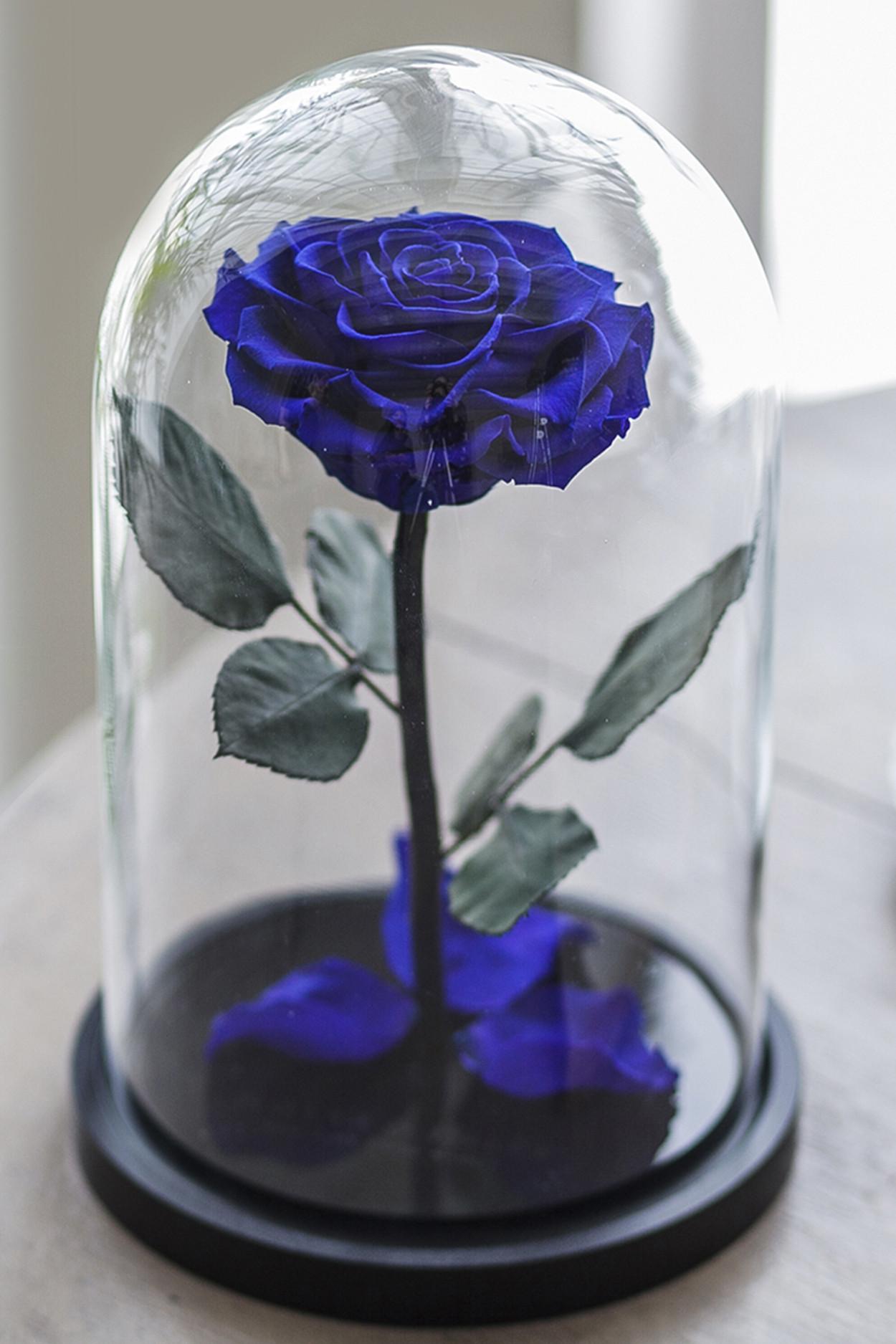 Роза в колбе премиум хит Темно синяя 27*15*11см