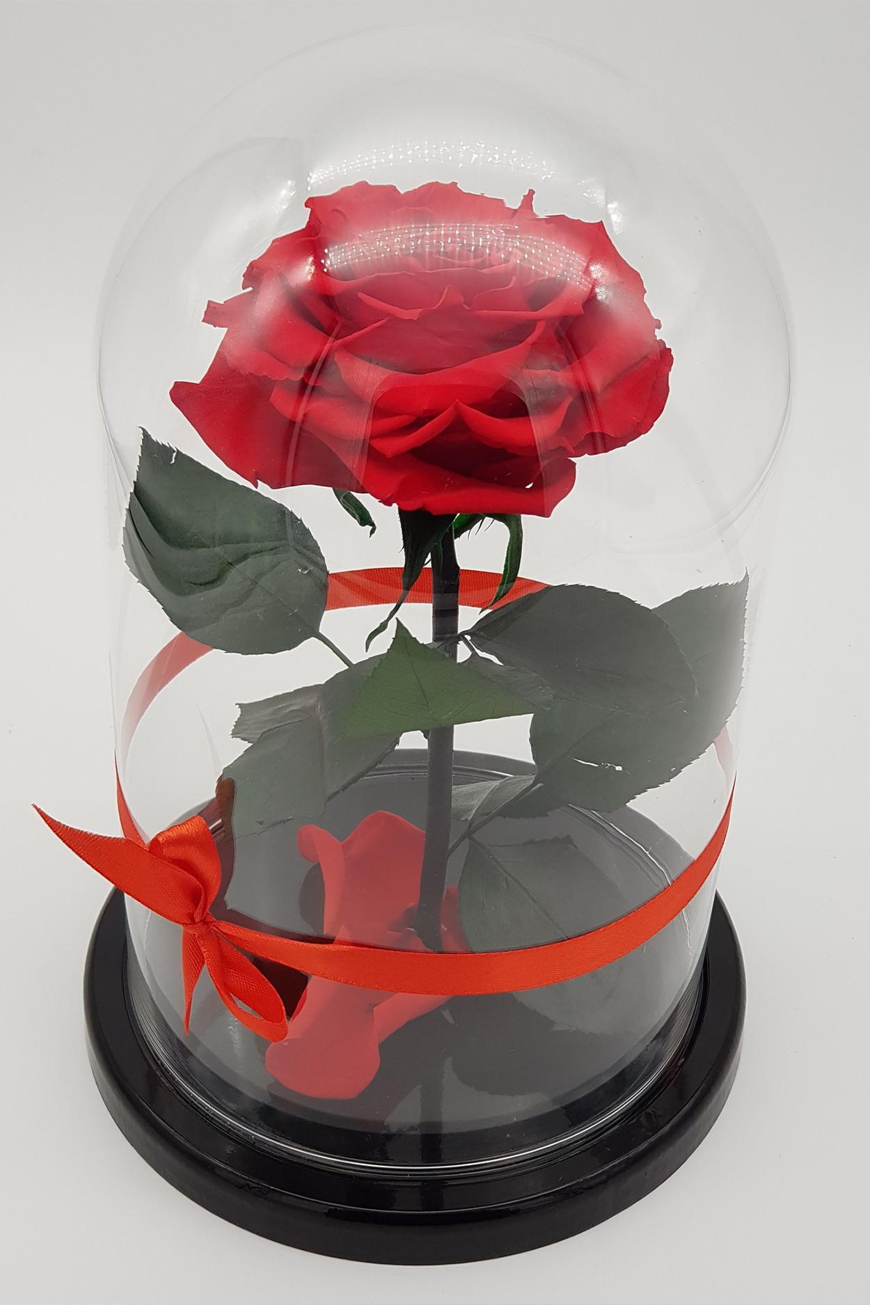 Роза в колбе Кинг Красная 30*18*12см