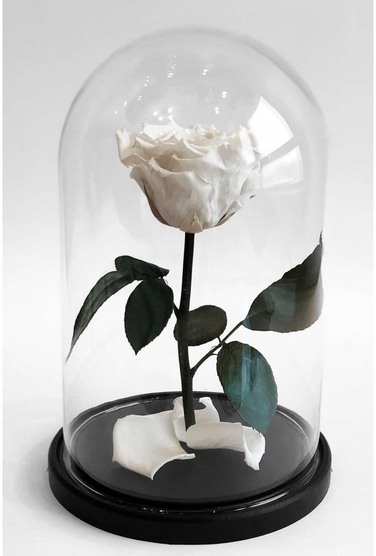 Роза в колбе премиум Белая 27*15*6см
