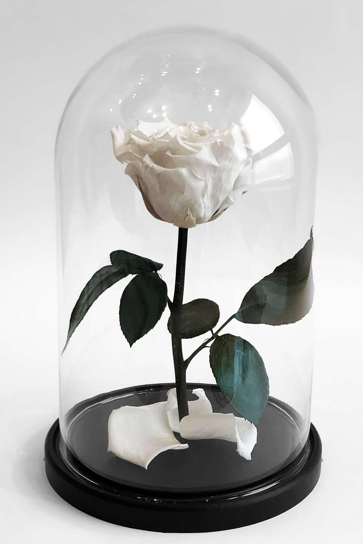 Роза в колбе мини Белая 22*12,5*6см