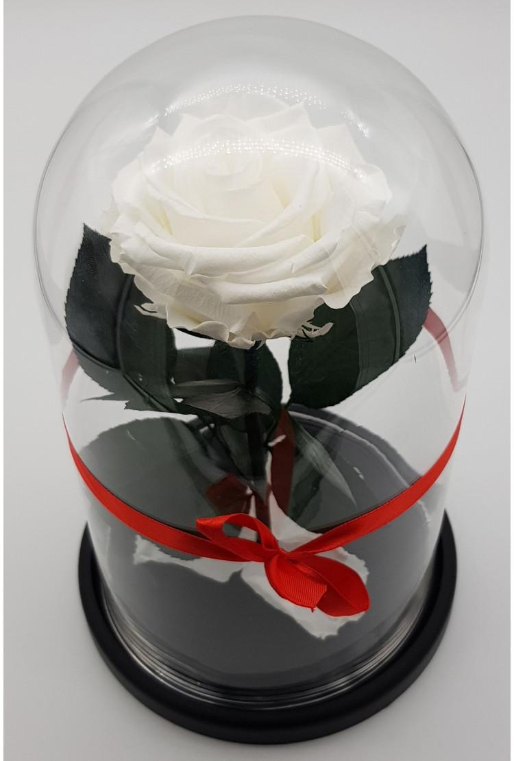Роза в колбе премиум Белая  27*15*8см