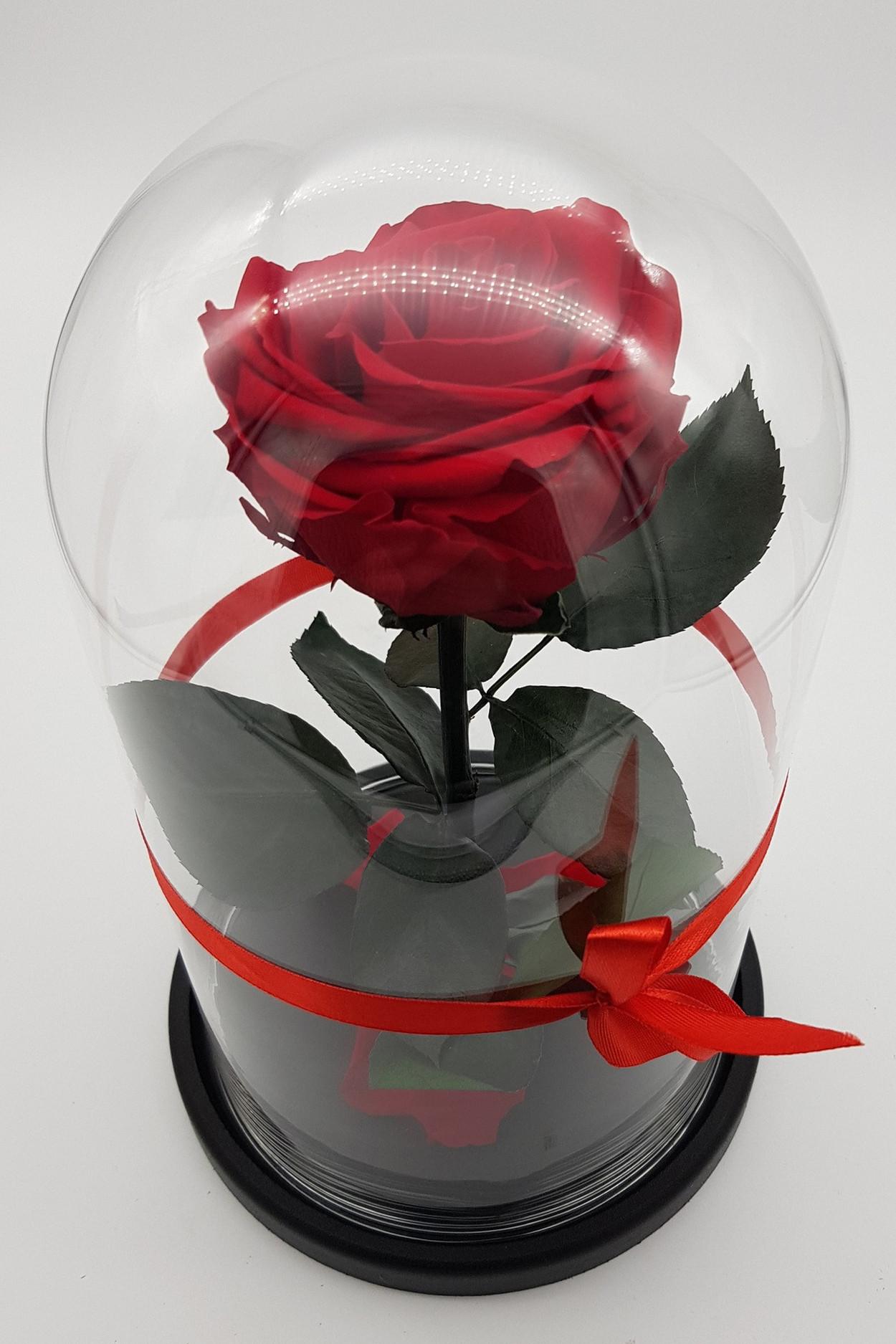 Роза в колбе премиум 7-8 Бордовая 27*15*8см