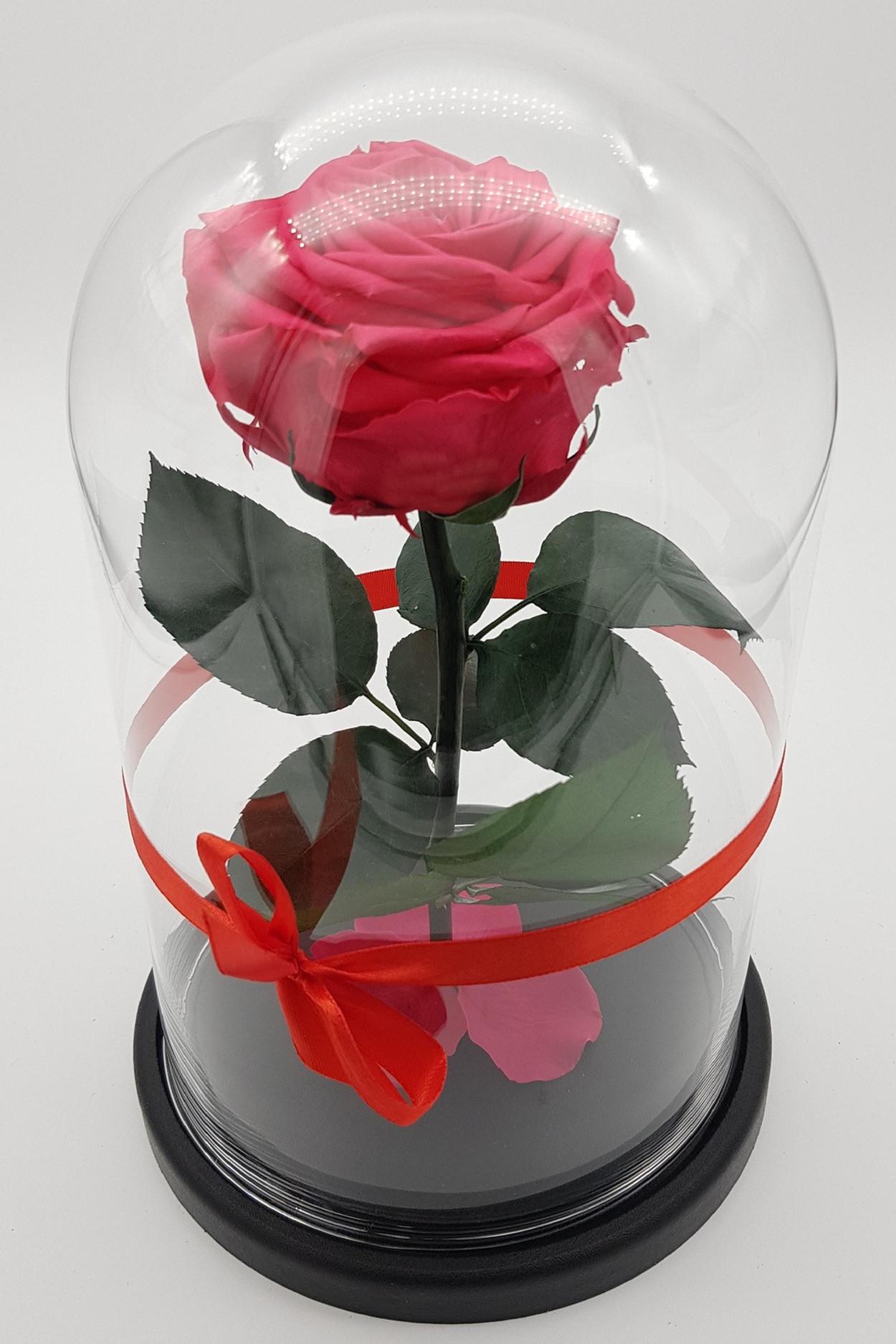Роза в колбе премиум Фуксия 27*15*8см