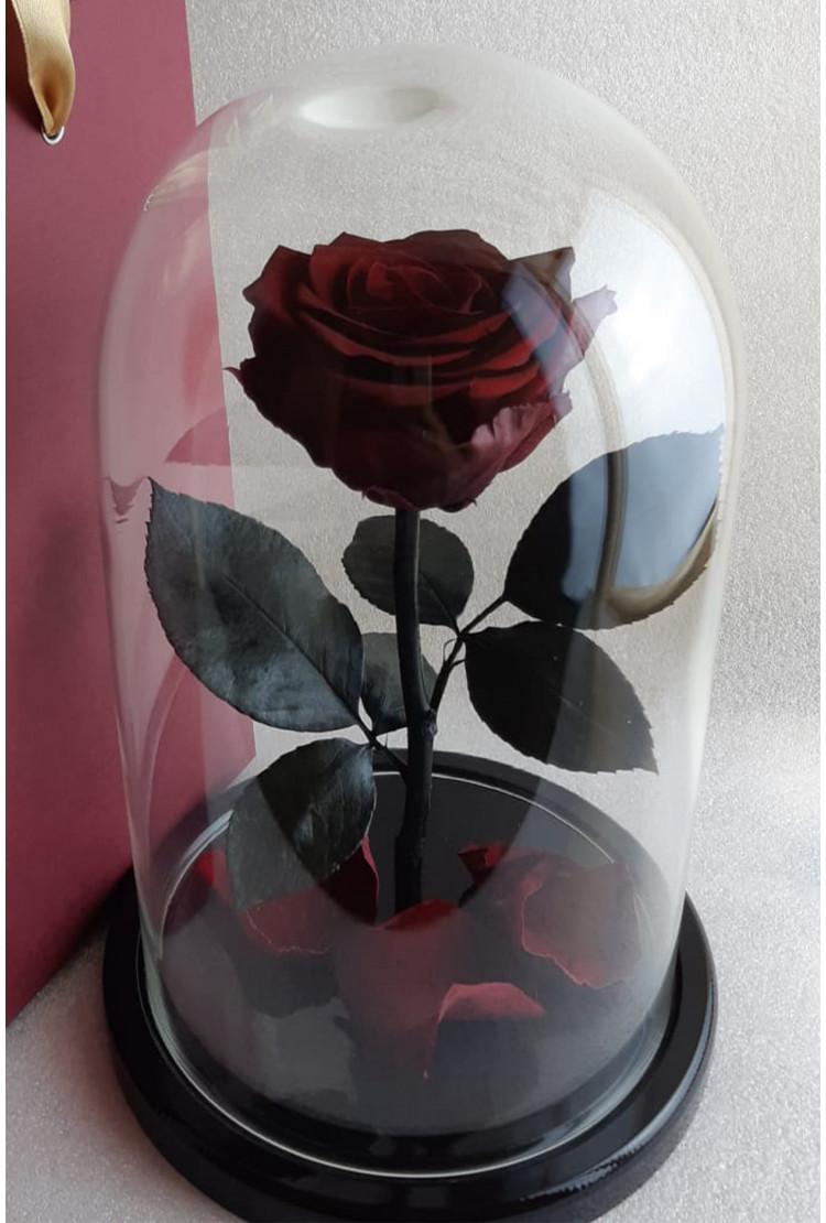 Роза в колбе премиум Вишневая 27*15*8см