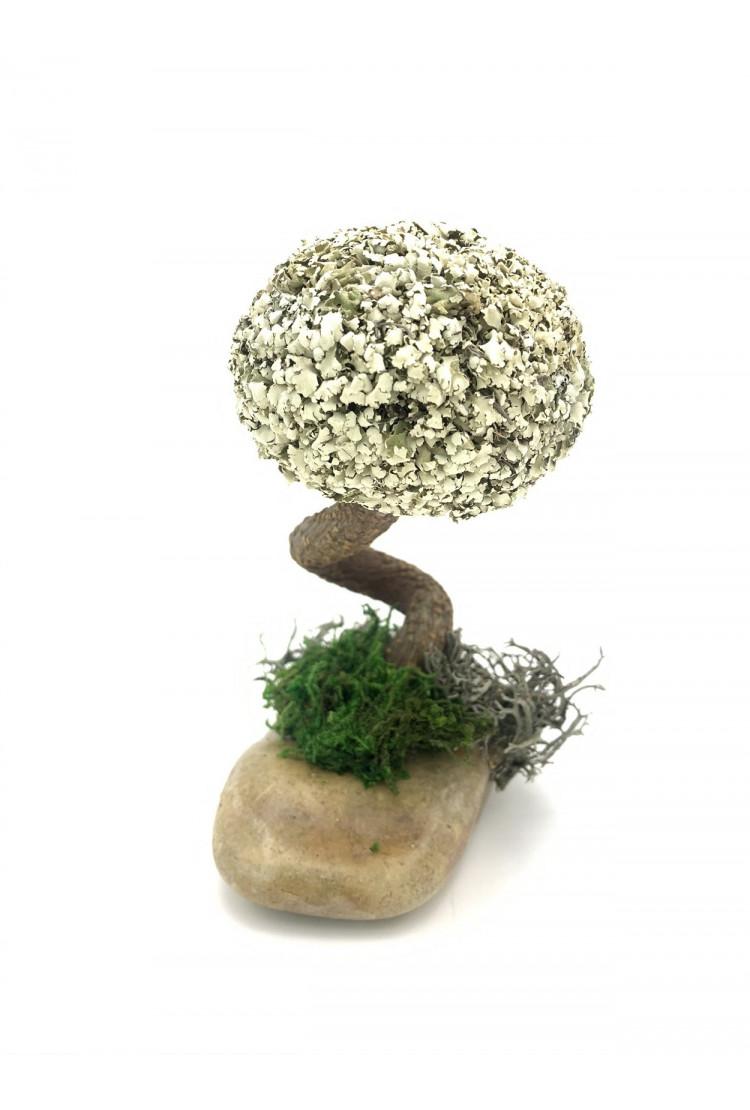 Деревце с кроной цетрарии (15см)