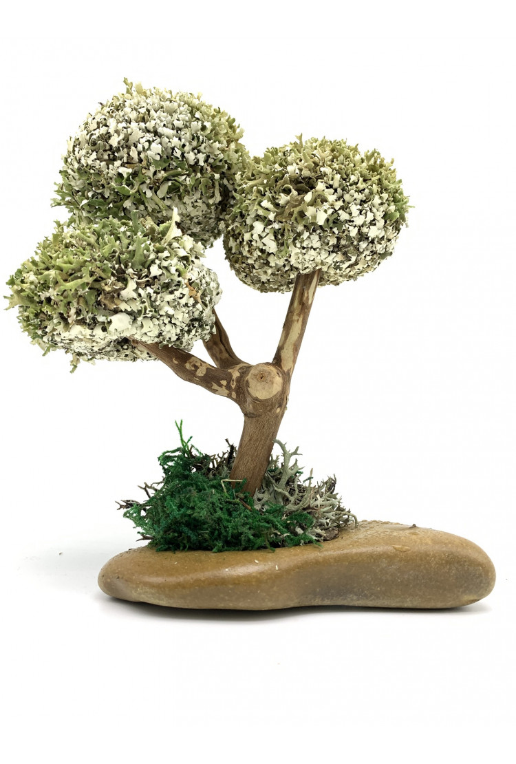 Деревце с круглыми кронами цетрарии (20см)