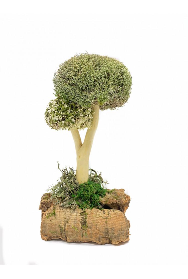 Дерево из Цетрарии (24см)