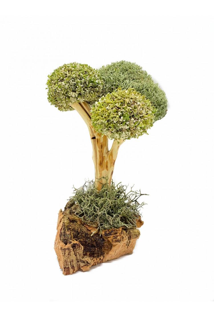 Дерево из Цетрарии (27см)