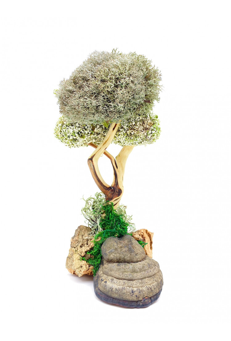 Дерево из Цетрарии (28см)