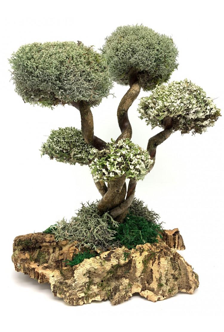 Дерево из Цетрарии - развивающаяся лиана (31см)