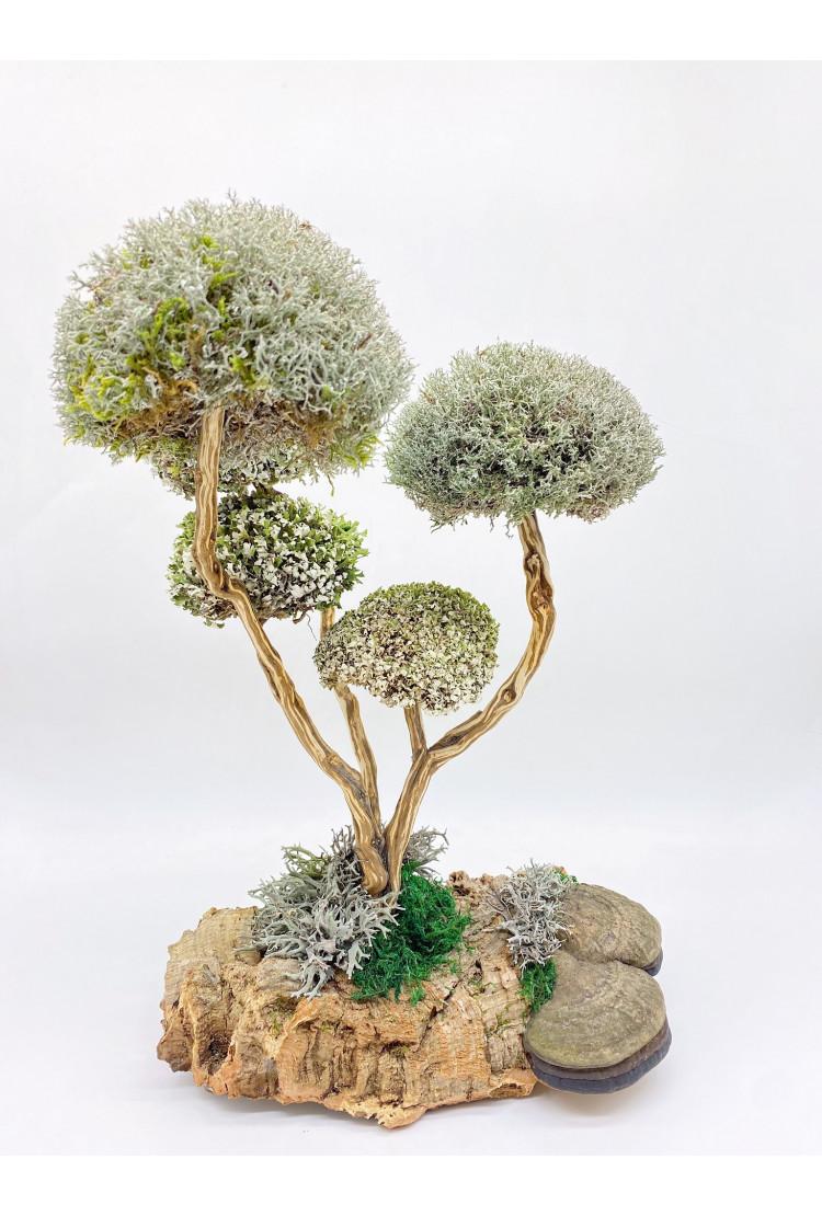 Дерево из цетрарии (36см)