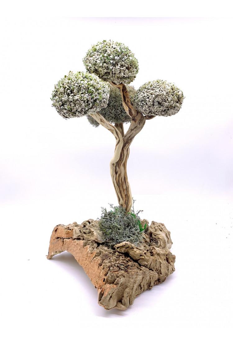 Дерево из цетрарии (38см)