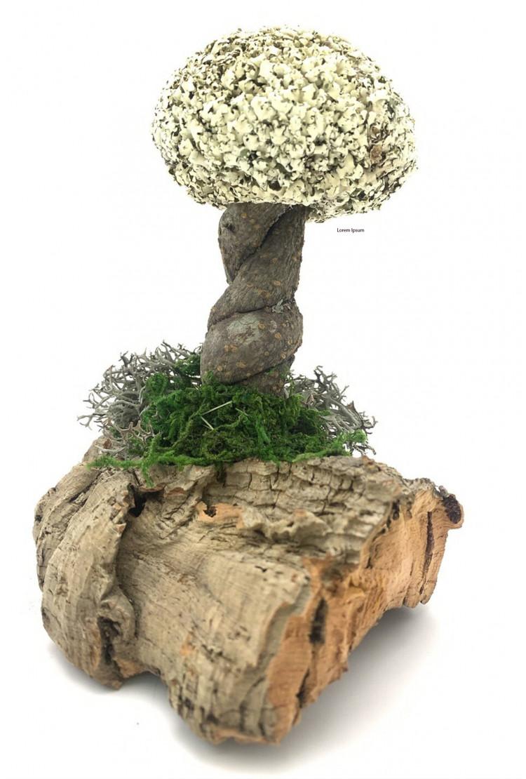Деревце лиана с кроной цетрарии (17см)