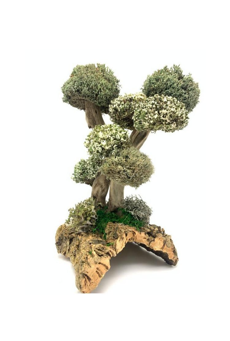 Дерево из цетрарии Бесстыдница