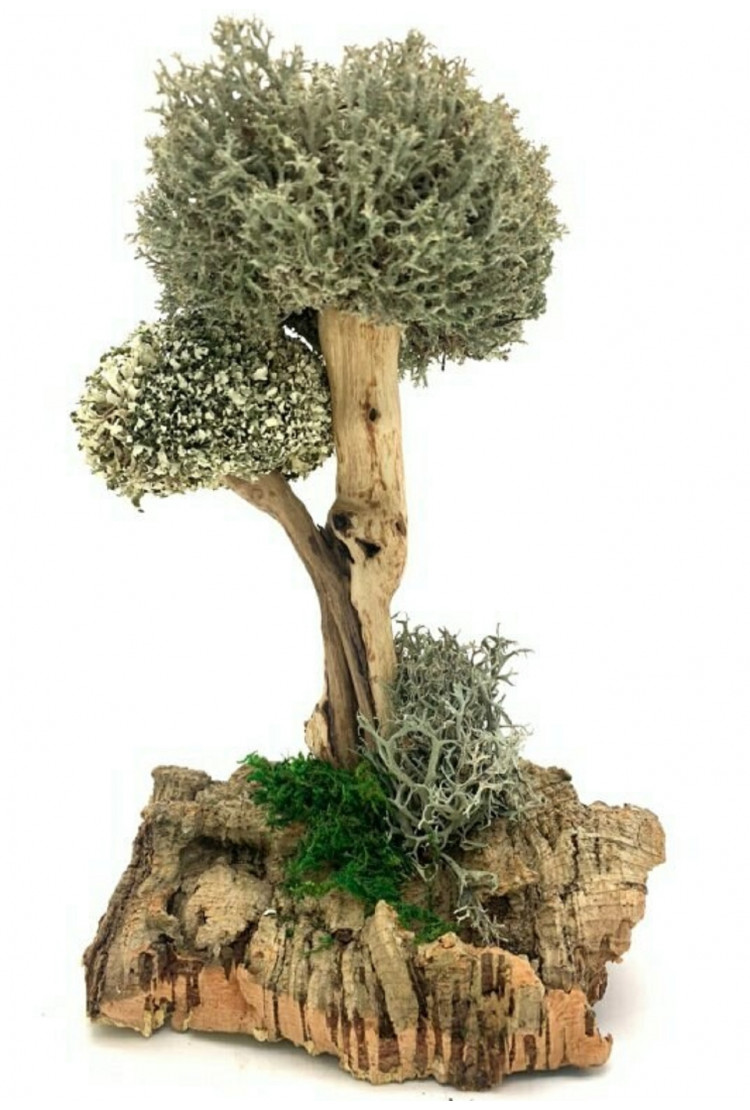 Сухоцвет цетрарии в виде дерева, 24 см