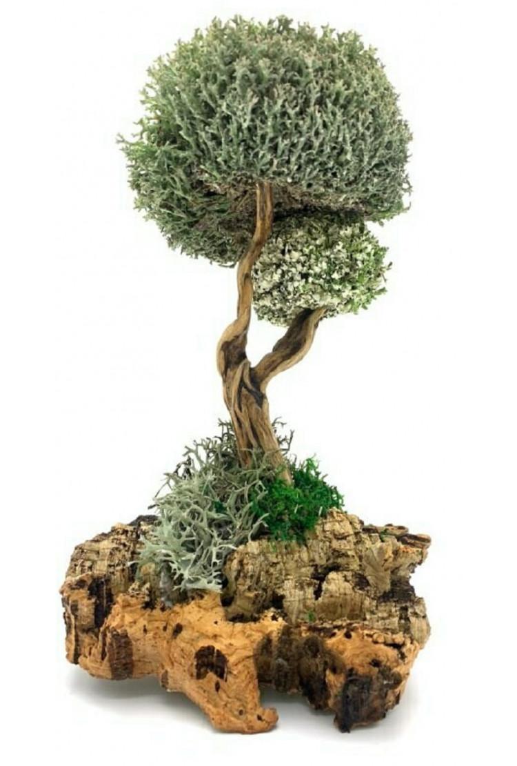 Сухоцвет цетрарии в виде дерева, 30 см