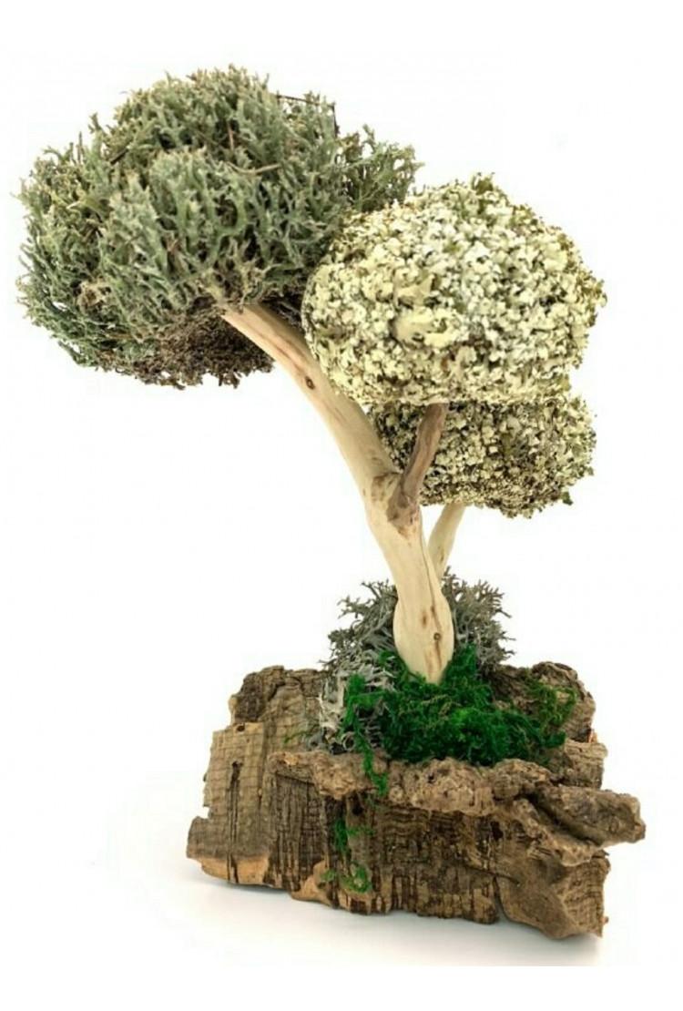 Дерево из цетрарии и пармелии, 26 см