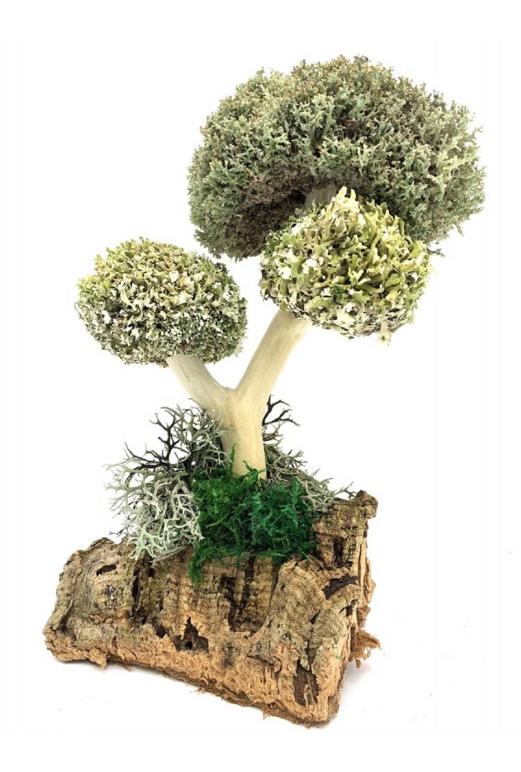 Дерево с кронами цетрарии и пармелии, 26 см