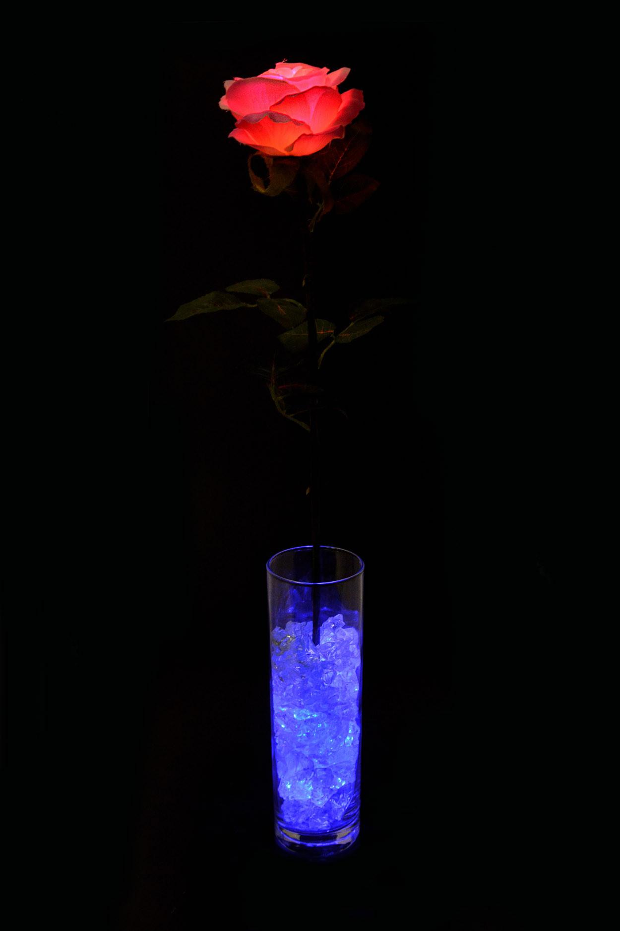 Ночник Роза Розовая с синей подсветкой