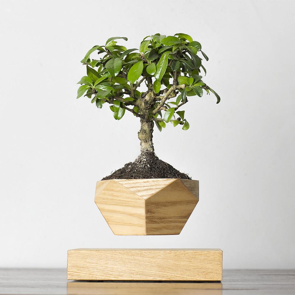 Левитирующее растение Бонсай (светлый)