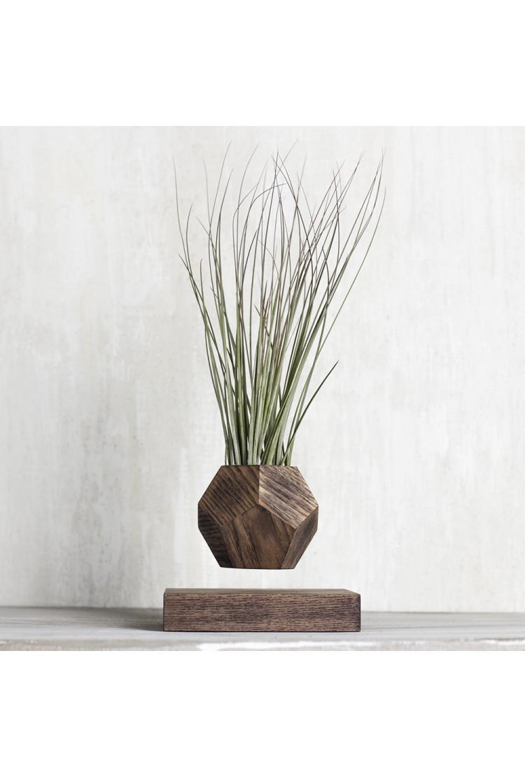 Левитирующее растение Тилландсия (венге)