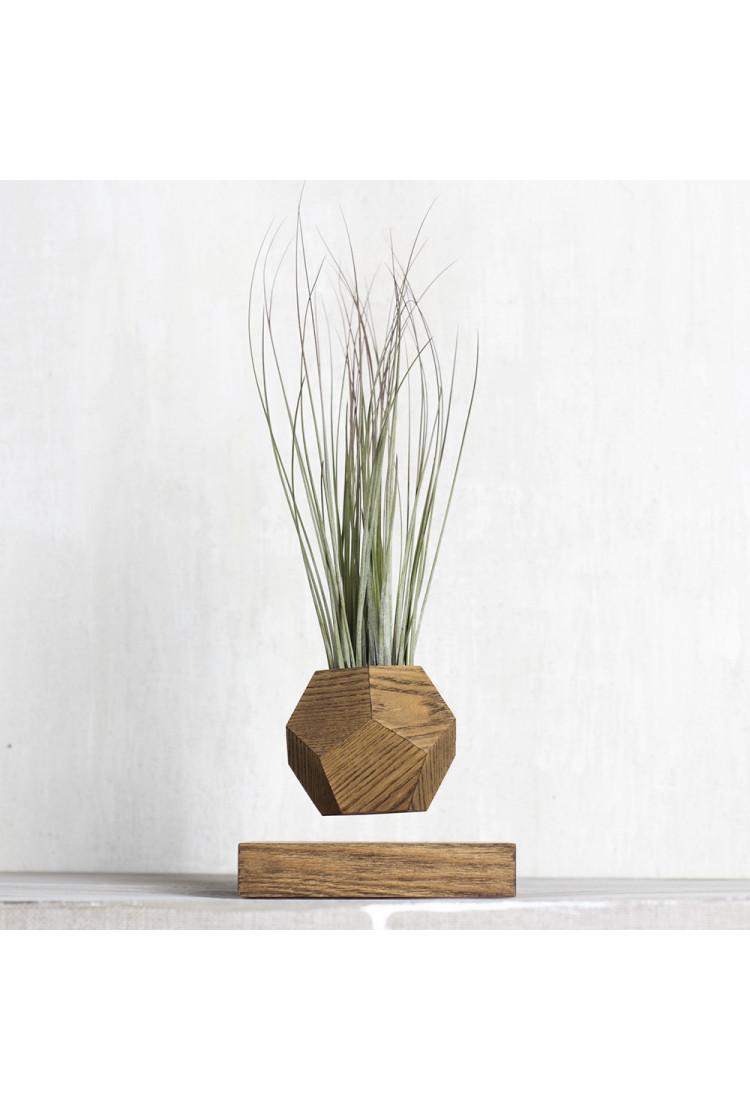 Левитирующее растение Тилландсия (темный)