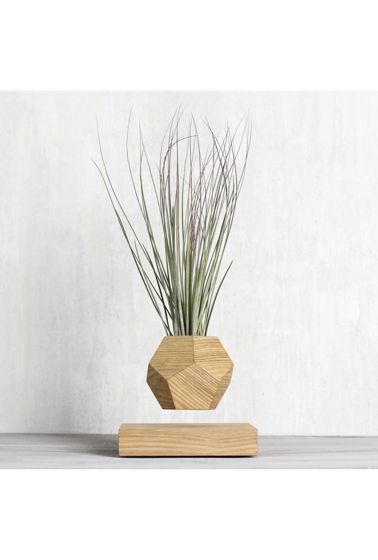 Левитирующее растение Тилландсия (светлый)
