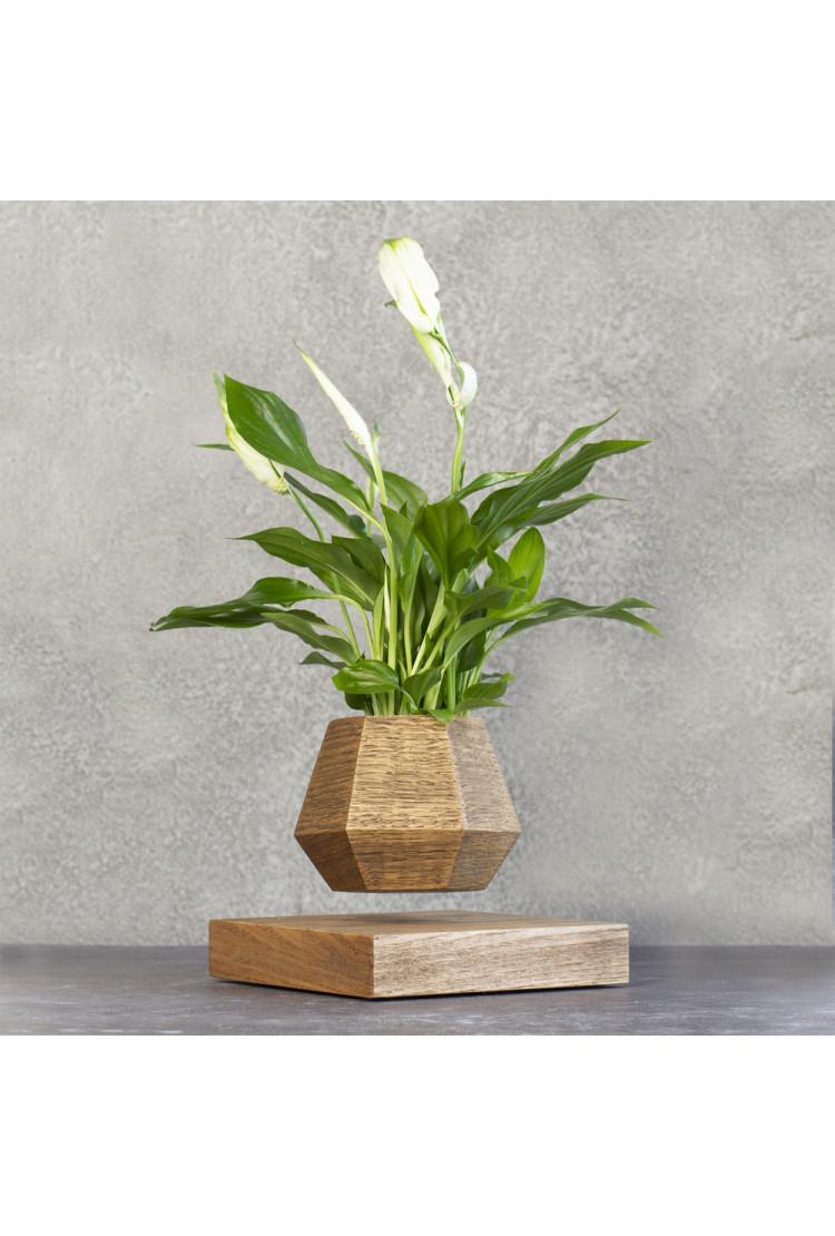Левитирующее растение Спатифиллум (темный)