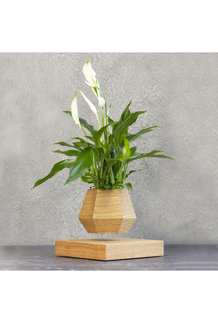 Левитирующее растение Спатифиллум (светлый)