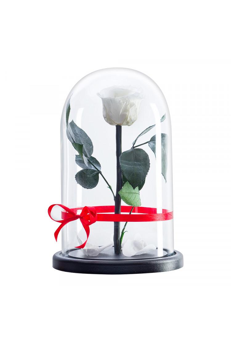 Роза в колбе премиум нежно Белая 27*15*6см