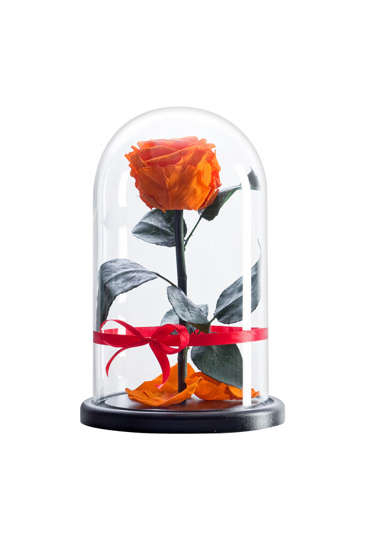 Роза в колбе премиум Оранжевая 27*15*8см