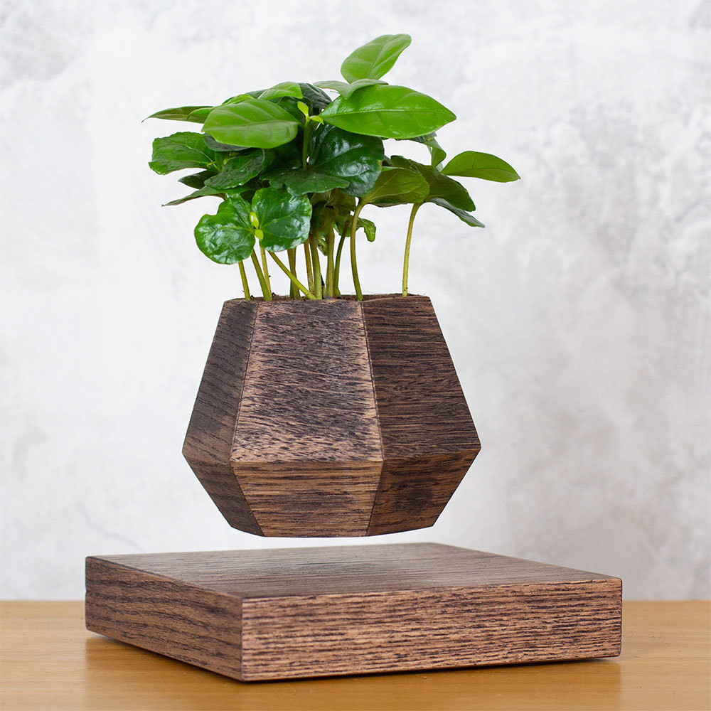 Левитирующее растение Кофе арабика (венге)