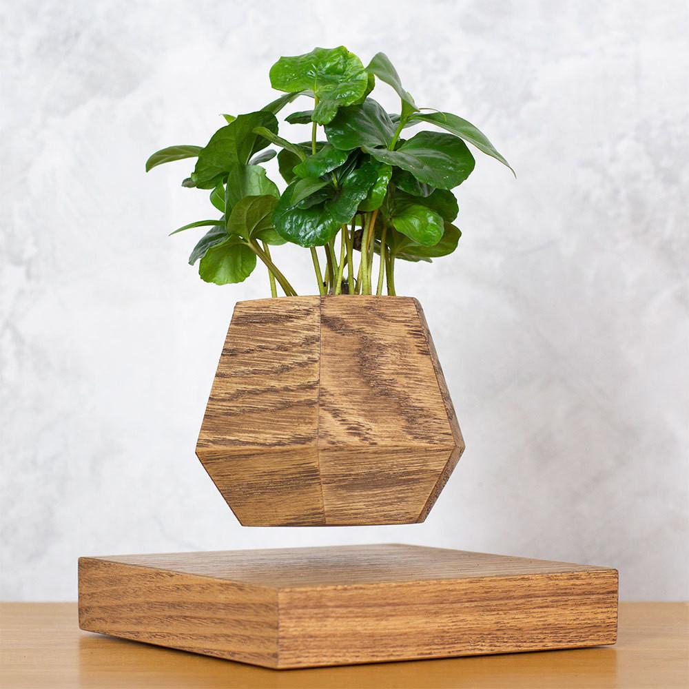 Левитирующее растение Кофе арабика (темный)